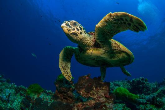sauvegarde tortues Bali